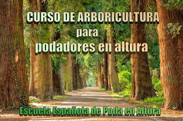 curso de arboricultura.jpg